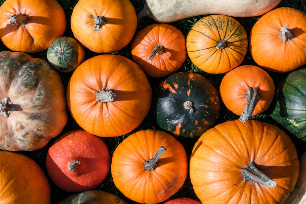 Different kind of pumpkins closeup. Halloween and autumn background